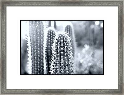 The Cacti Family Framed Print by Courtney Lively