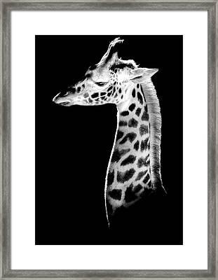The Calf Framed Print by Marius Sipa