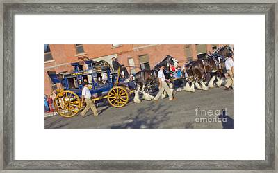 The Calgary Stampede Carriage Framed Print by Donna Munro