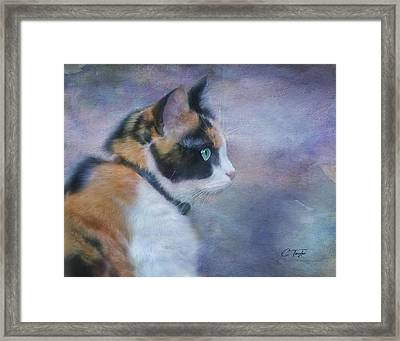 Framed Print featuring the digital art The Calico Staredown  by Colleen Taylor