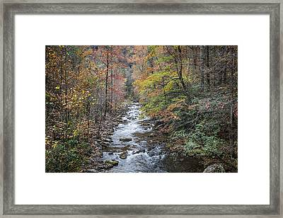 The Call Of The Forest Framed Print