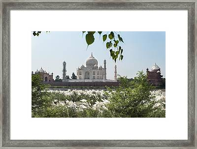 The Calm Behind The Taj Mahal Framed Print