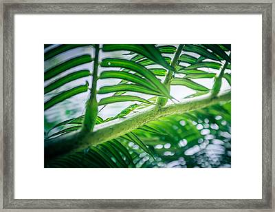 The Camouflaged Framed Print