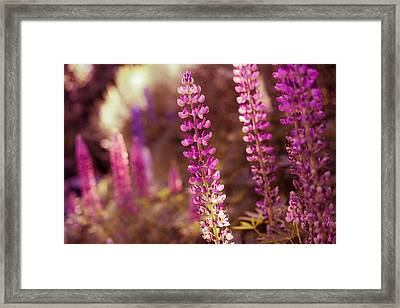 The Candle Framed Print