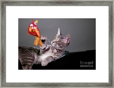 The Cat And The Fish Framed Print