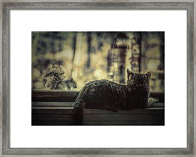 The Cat And The Squirrel Framed Print