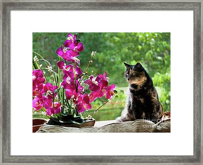The Cat And The Violets Framed Print