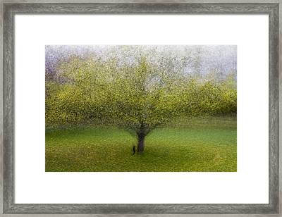 The Cat By The Tree Framed Print