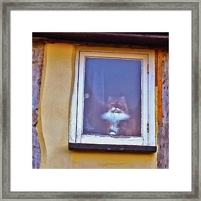 The Cat In The Window Framed Print