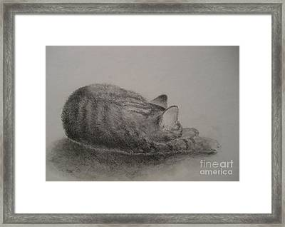 The Cat Series II Framed Print by Sabina Haas