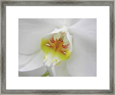 Framed Print featuring the photograph The Cat Side Of An Orchid by Manuela Constantin