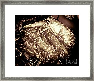 The Catch  Framed Print by Baggieoldboy