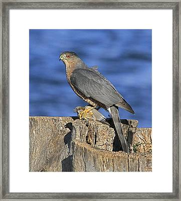 The Catch Framed Print by Robert Pearson