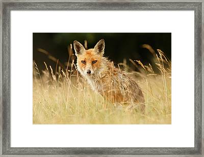 The Catcher In The Grass - Wild Red Fox Framed Print