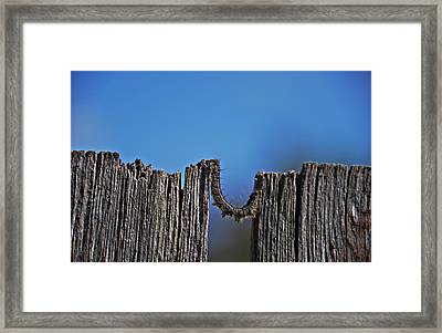 The Caterpillar Framed Print by Cendrine Marrouat