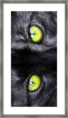 The Cat's Eyes Framed Print by David Lee Thompson