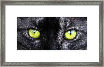 The Cat's Eyes Horizontal Framed Print by David Lee Thompson