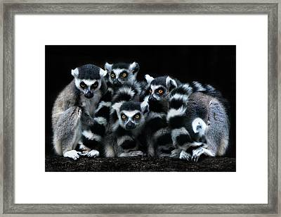 The Catta Gang Framed Print