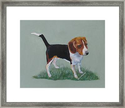 The Cautious Beagle Framed Print