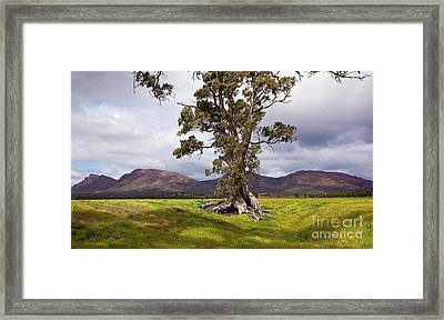 The Cazneaux Tree Framed Print by Bill Robinson