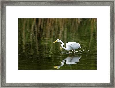 The Central Park Egret Framed Print by M Nuri Shakoor