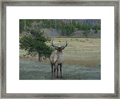 The Challenge Framed Print by David Wilkinson