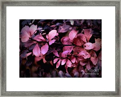 The Changing Of The Seasons Framed Print