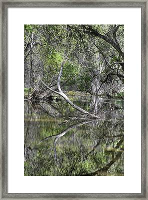 The Charm Of Water And Wood Framed Print by Thomas Todd