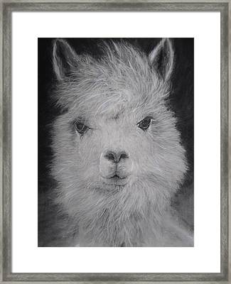The Charming Llama Framed Print by Adrienne Martino