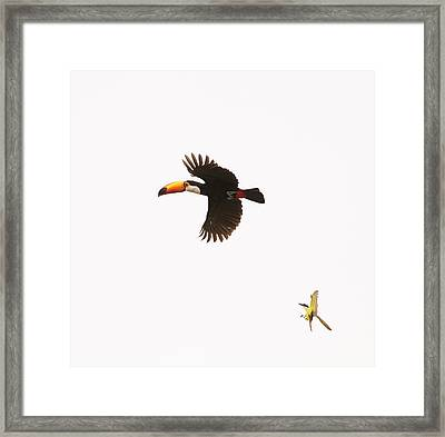 Framed Print featuring the photograph The Chase by Alex Lapidus