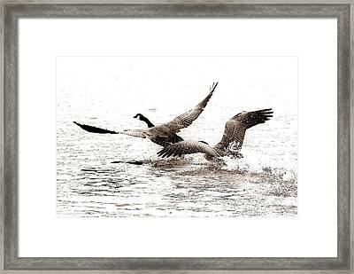 The Chase  Framed Print
