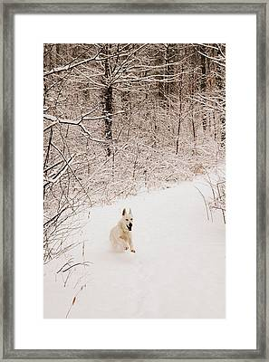 The Chase Framed Print by Cheryl Helms