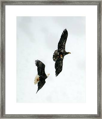 The Chase Framed Print by Mike Dawson