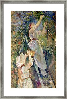 The Cherry Picker Framed Print by Berthe Morisot