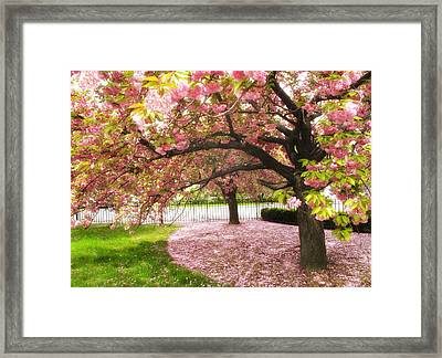 The Cherry Tree Framed Print by Jessica Jenney