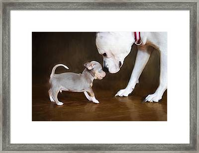 The Chihuahua Vs The Pity Framed Print by Darren Fisher