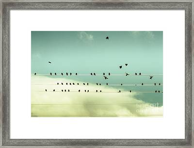 The Chorus Of Birds Framed Print
