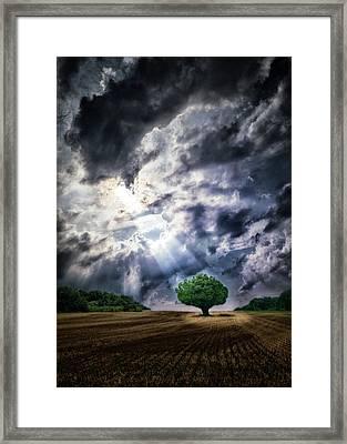 The Chosen Framed Print by Mark Fuller