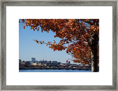 The Citgo Sign Through The Trees Boston Ma Charles River 2 Framed Print by Toby McGuire