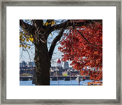 The Citgo Sign Through The Trees Boston Ma Charles River Framed Print by Toby McGuire