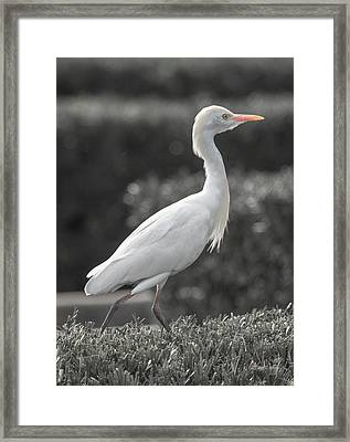 The City Bird Saint Augustine Framed Print by Betsy Knapp