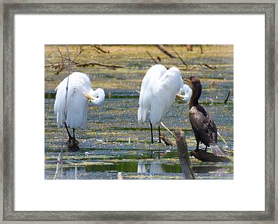 The Coach Framed Print