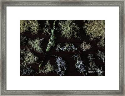 The Collection Of Lichens Framed Print