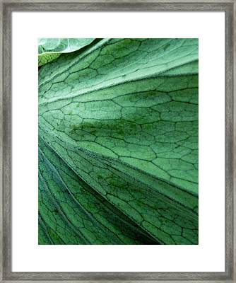 The Color Green Framed Print by Gwyn Newcombe