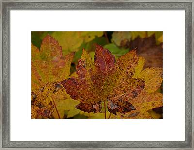 The Color Of Autumn Framed Print by Jeff Swan