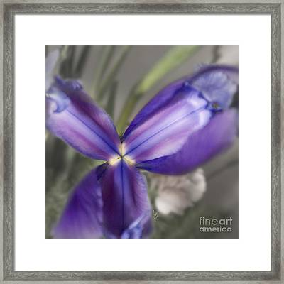 The Color Of January 2 Framed Print