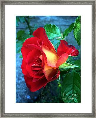 The Color Of Love Framed Print