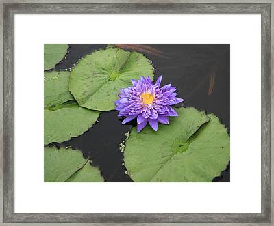 Framed Print featuring the photograph The Color Of Splendor by David Dunham