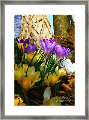 The Color Of Spring-3 Framed Print by Robert Pearson