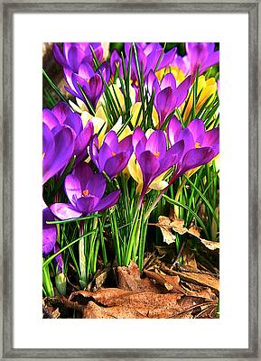 The Color Of Spring Framed Print by Robert Pearson